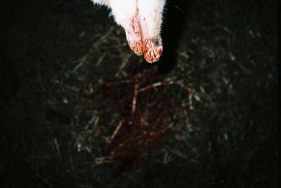 HISTORIA DE LA MEVA MORT, di Albert Serra