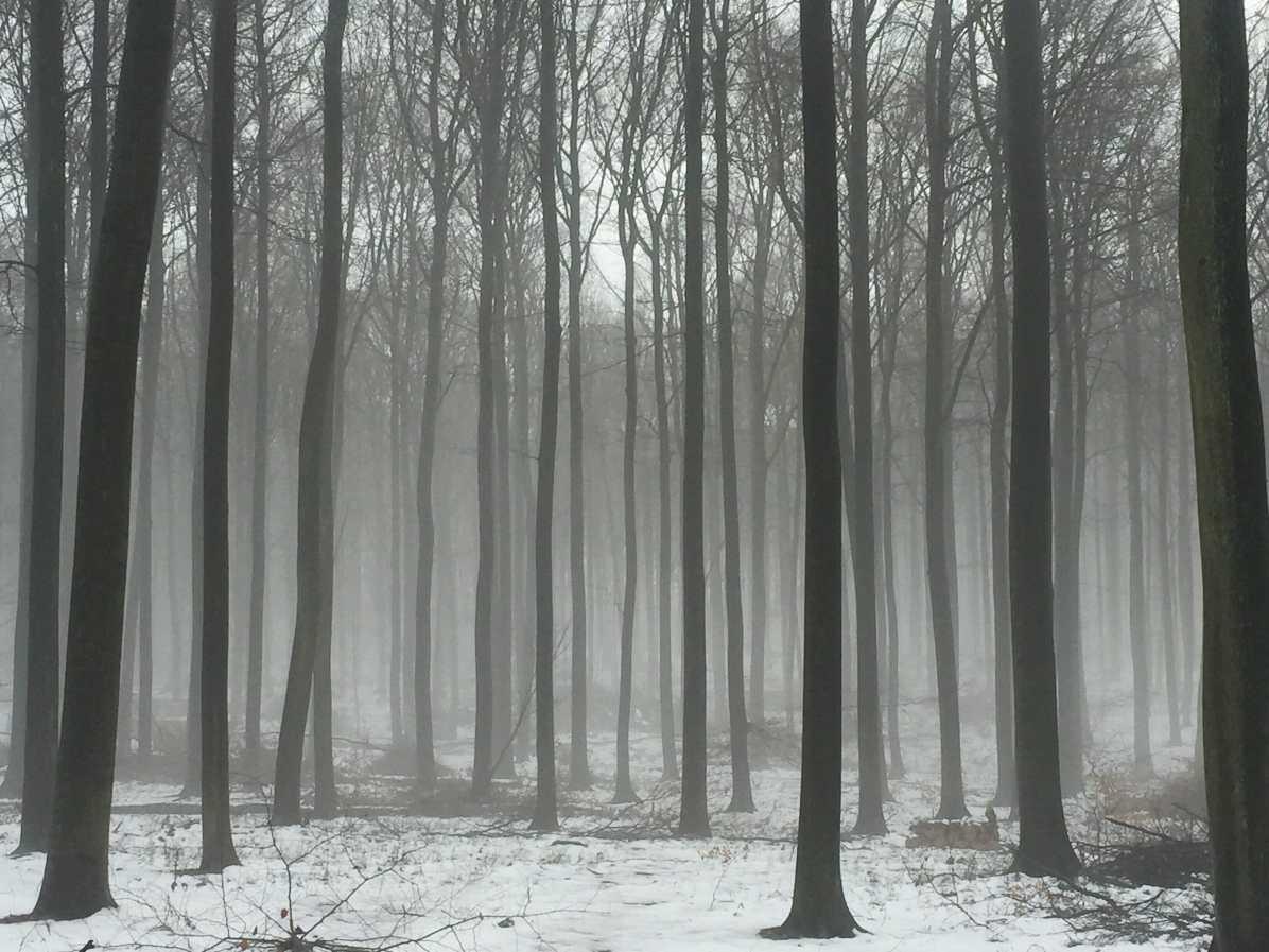 traileur en hiver