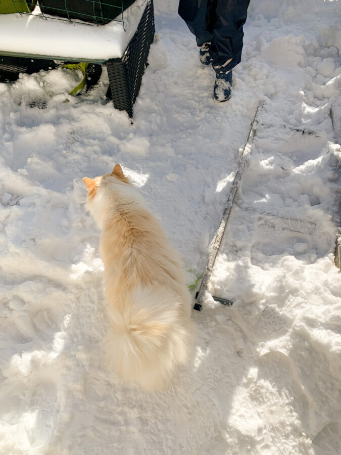 Mijn leven in foto's #136 - Linkie in de sneeuw
