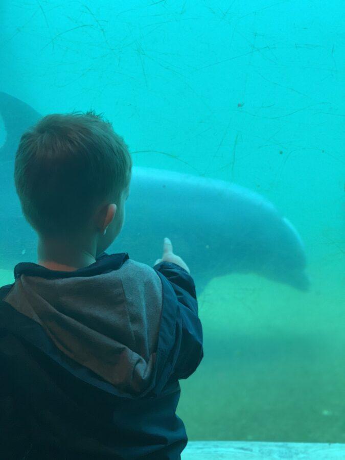 Mijn leven in foto's #145 - Dolfinarium