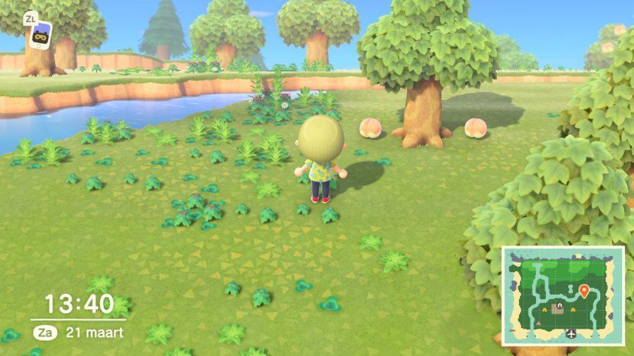Animal Crossing - New Horizons - fruit verzamelen