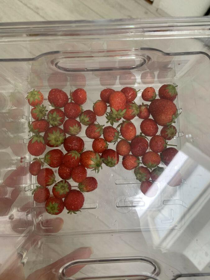 Moestuin update augustus 2021 - Aardbeien