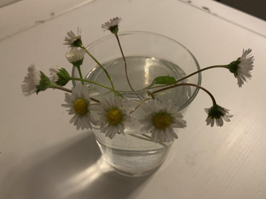 Mijn leven in foto's #144 - bloemetjes