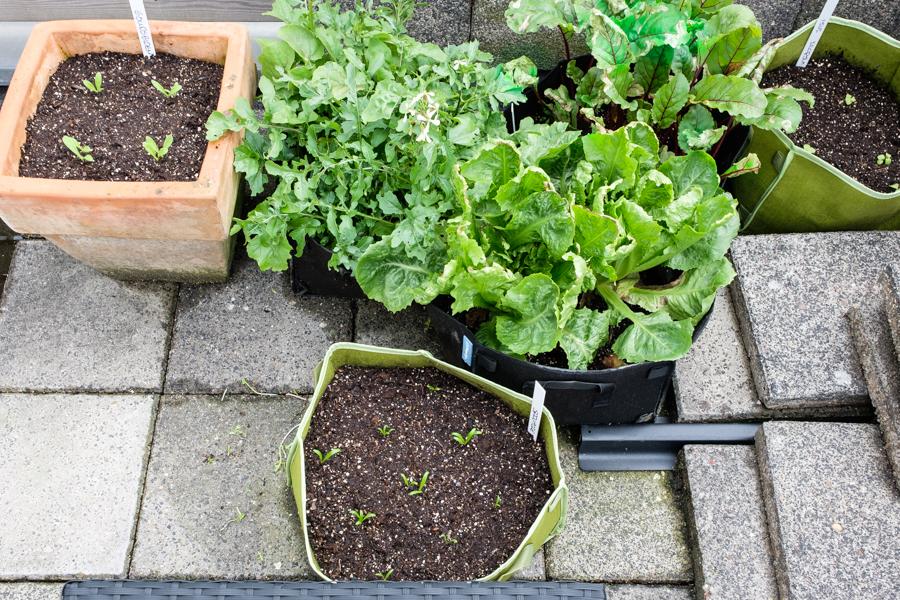 Makkelijke moestuin update met nieuwe plantjes