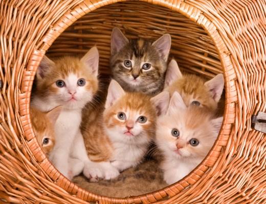 Kedi | Betoş Savaş | Patili Bir Hayat