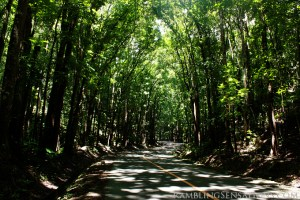 Bohol's Man-Made Forest