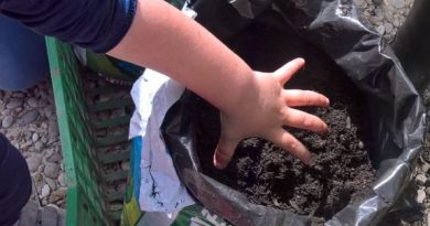 Green day, le mani nella terra