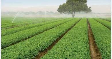 """""""Con banca della terra valorizzazione di 5mila terreni agricoli"""". Assessore Regione Lazio Alessandra Sartore, in una nota """"un'opportunità anche per i giovani""""."""