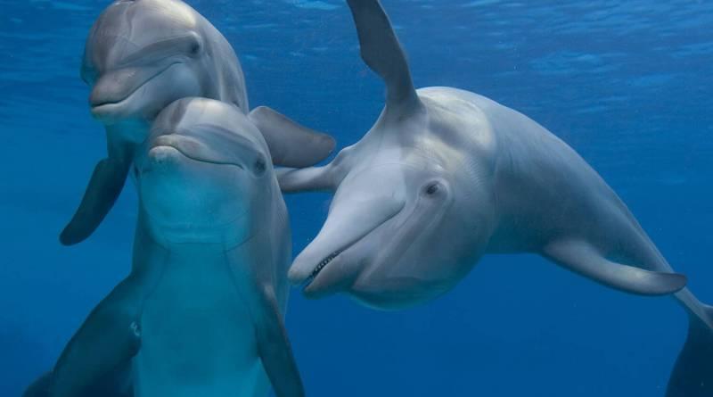 """Ingresso nelle vasche dei delfini concesse ai visitatori. Rosalba Giugni, Marevivo: Ministro Galletti """"su quali basi scientifiche?""""."""