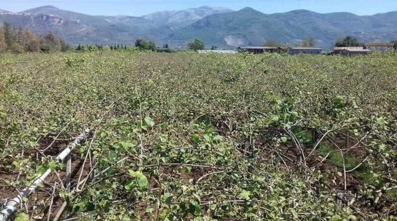 """Potenziale produttivo agricolo danneggiato Mauro Buschini, capogruppo del Pd in Regione Lazio """"Bando da 7,5mln percontenimento danni agricoli da calamità e prevenzione""""."""