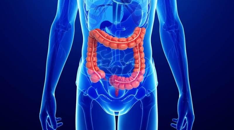 I risultati dello studio dell'Istituto Regina Elena di Roma pubblicati su Embo Journal e Nucleic Acids Research. Tumore colon retto e proteina TRF2.