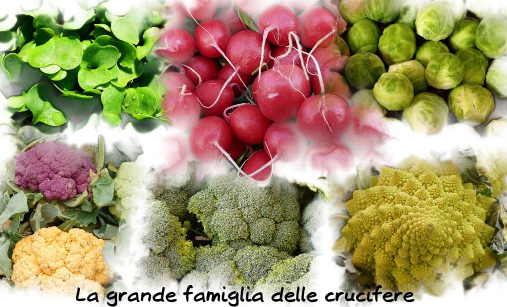 crucifere-brassicacee-broccoli-cavolfiori-ravanelli-rucola-cavolini-Bruxelles