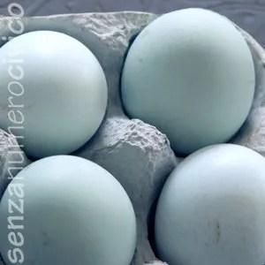 uova azzurre di araucana