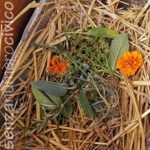 mix di erbe aromatiche nei nidi