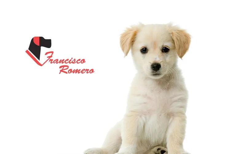 posicionamiento seo collares para perros
