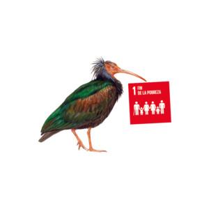 """""""17 aves para 17 ODS""""   Las aves muestran el camino para cumplir los Objetivos de Desarrollo Sostenible"""