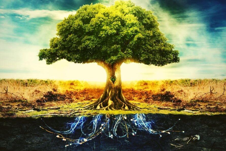 arbre de vie signification du symbole porte-bonheur