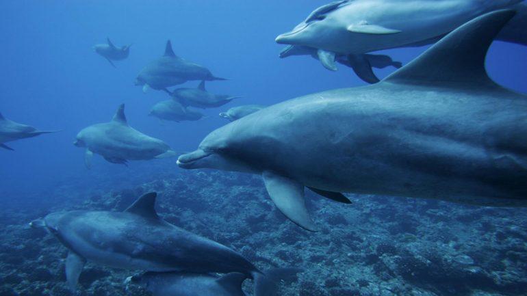 delfines-en-el-oceano