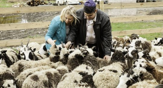 Gil and Jenna Lewinsky feed the sheep at their farm in Abbotsford, Vancouver, Canada, in this undated photo from 2016. (courtesy Mustard Seed Imaging)