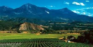 Grand Junction Vineyard
