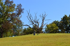 The craggy tree at Devoll.