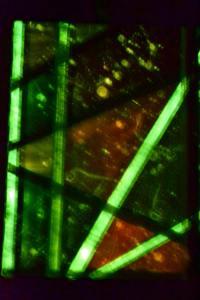 Artemis Sere SS-SG-00336 Ubiquitous Bliss 1