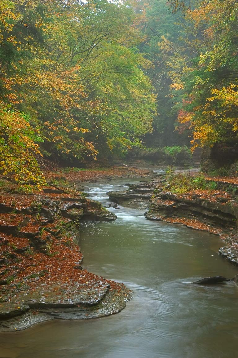 Fall Turkey Wallpaper Album Dryden Watkins Glen Abbott Loop New York