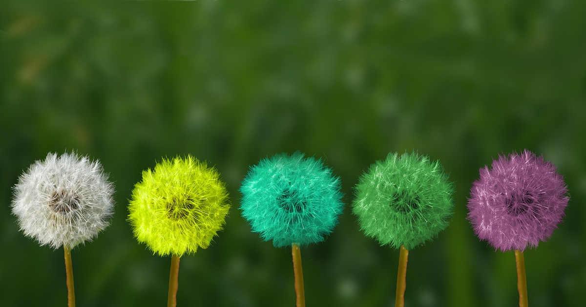 Fiori colorati con creatività