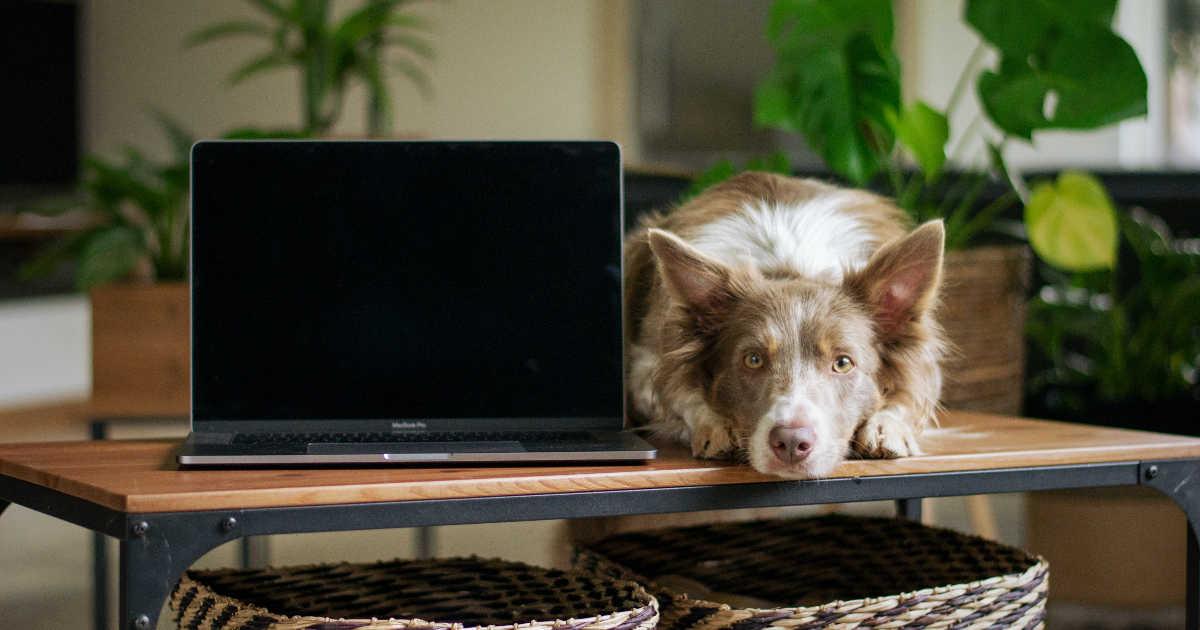 Un cane di fianco a un computer.