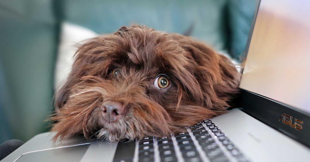 Un cane con il muso appoggiato sulla tastiera del computer