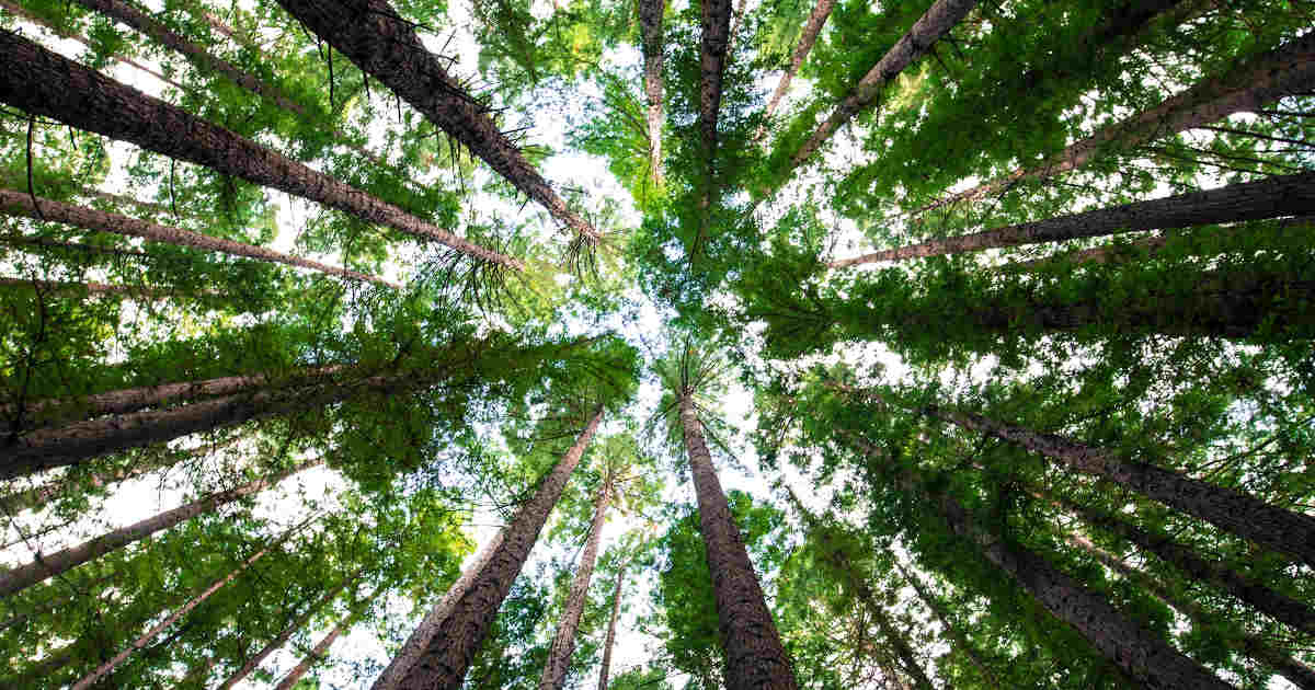 Foresta di alberi