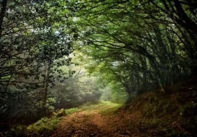 Ammesso a finanziamento un progetto del Comune di Nicosia per quasi mezzo milione di euro per valorizzare l'ecosistema della riserva Campanito-Sambughetti