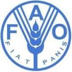 FAO: più fondi all'agricoltura e meno spreco di cibo