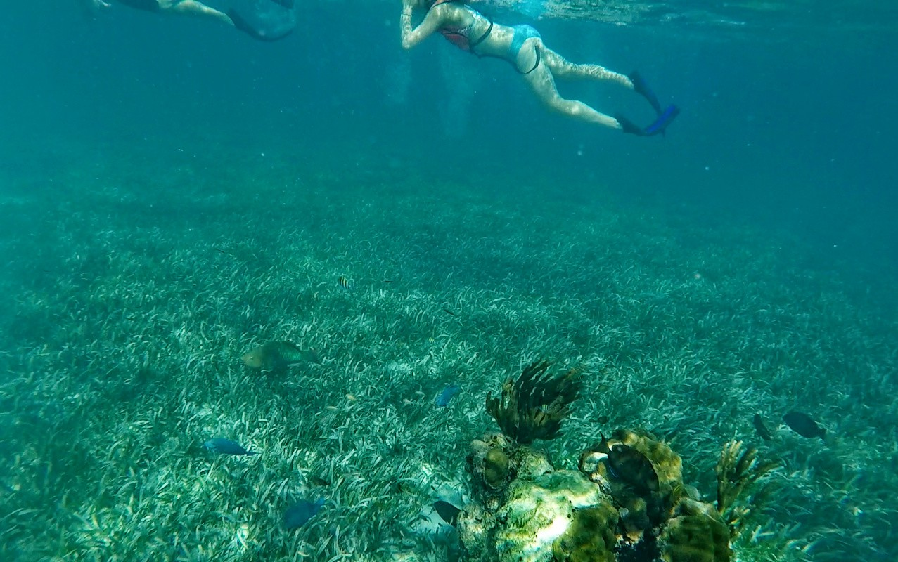 Keys snorkeling floride