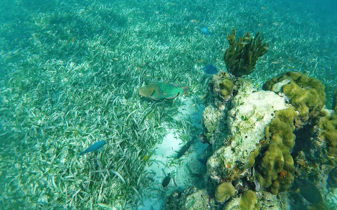 Keys snorkeling sous l'eau