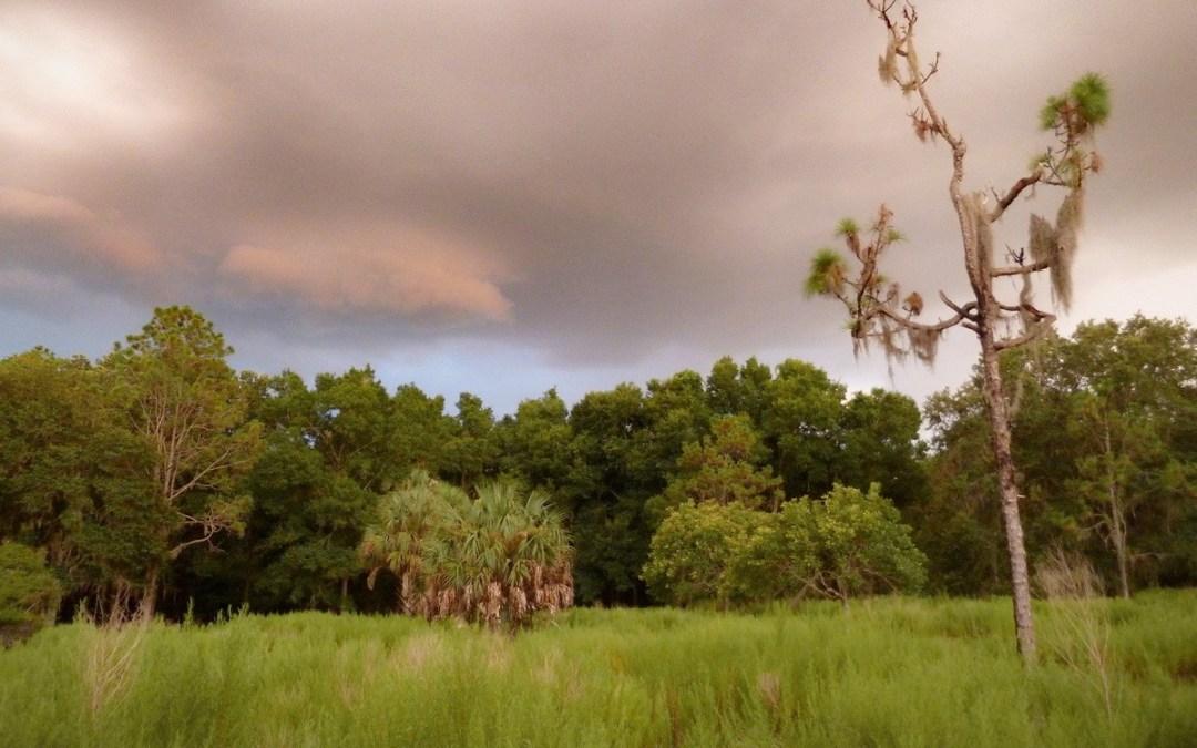 Road trip en Floride : itinéraire de 3 semaines à travers le Sunshine State