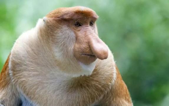 brasil número máximo de espécies de macacos