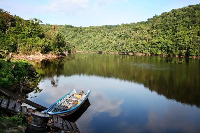 Guyana Wallpaper Kaieteur Falls Nannostomus Minimus Least Pencilfish Seriously Fish