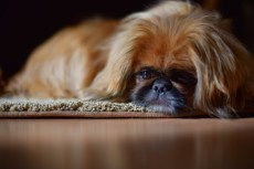 Scoobie on carpet