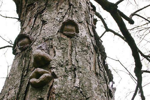 Pohon Siul
