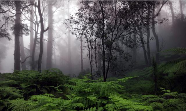 Hujan bermanfaat untuk hutan