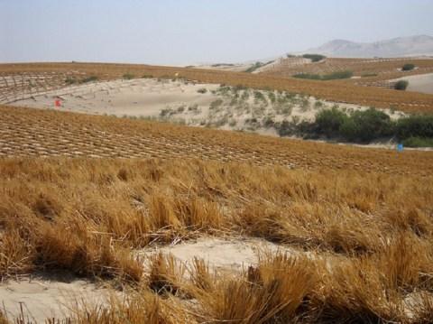 La desertificación, una crisis silenciosa e invisible, amenaza a un tercio de la superficie mundial. Esta imagen de 2013 registra el intento de volver fértil partes del desierto de Kubuqi, en China. Crédito: Manipadma Jena / IPS