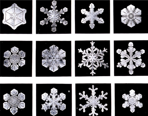 Wilson Bentley Snowflakes Serving From Home