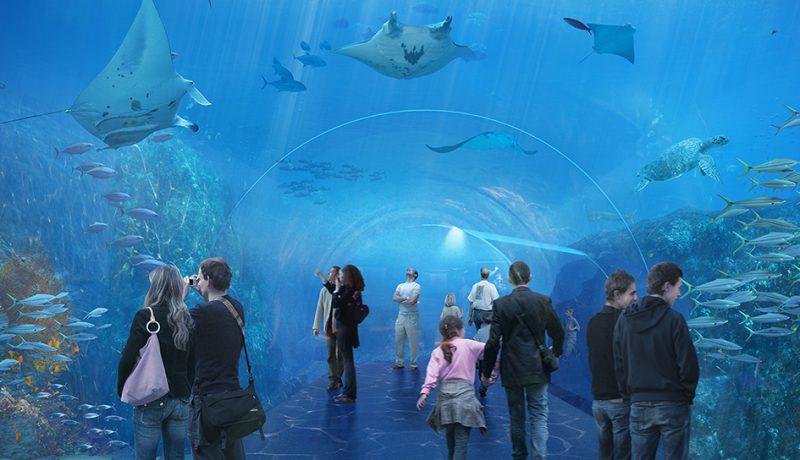 Grand Nausicaá : Le public pourra effectuer une plongée en eaux profondes grâce au passage dans une tunnel de 18 m de long. Crédit ©Sophie et Jacques Rougerie
