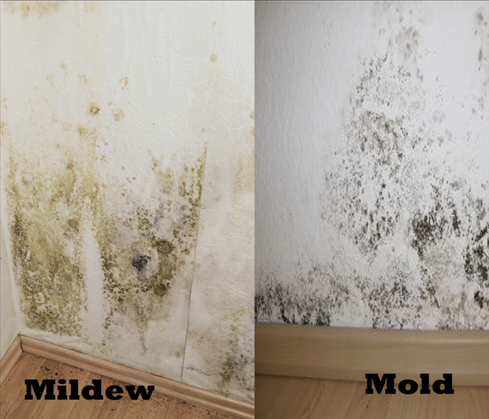 How To Clean Mold Bathroom Kill Black Mould How To Clean