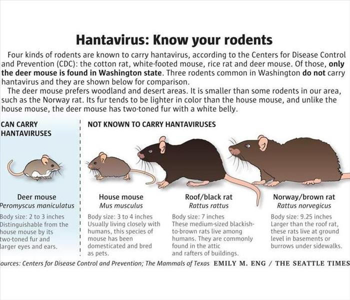 Clean Up of Rodent Droppings/Feces and Urine When the Hantavirus ...