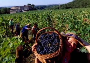 pekerja anggur by broken redeemed