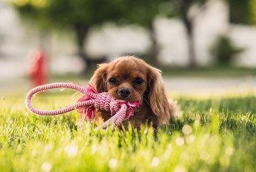 Deneme PetShop