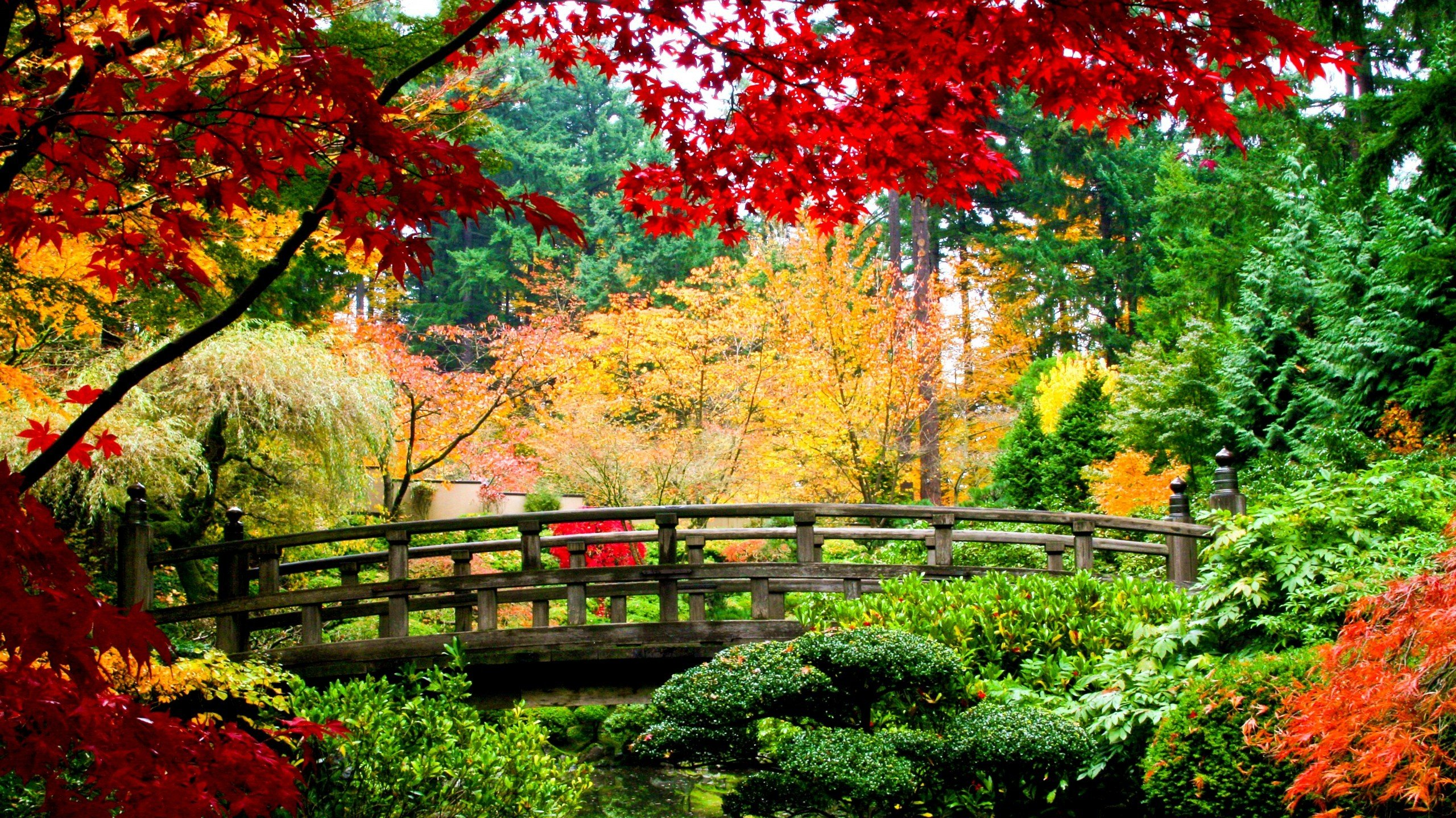 Note 8 Fall Wallpapers Nature Trees Autumn Colorful Garden Wallpaper 2560x1440