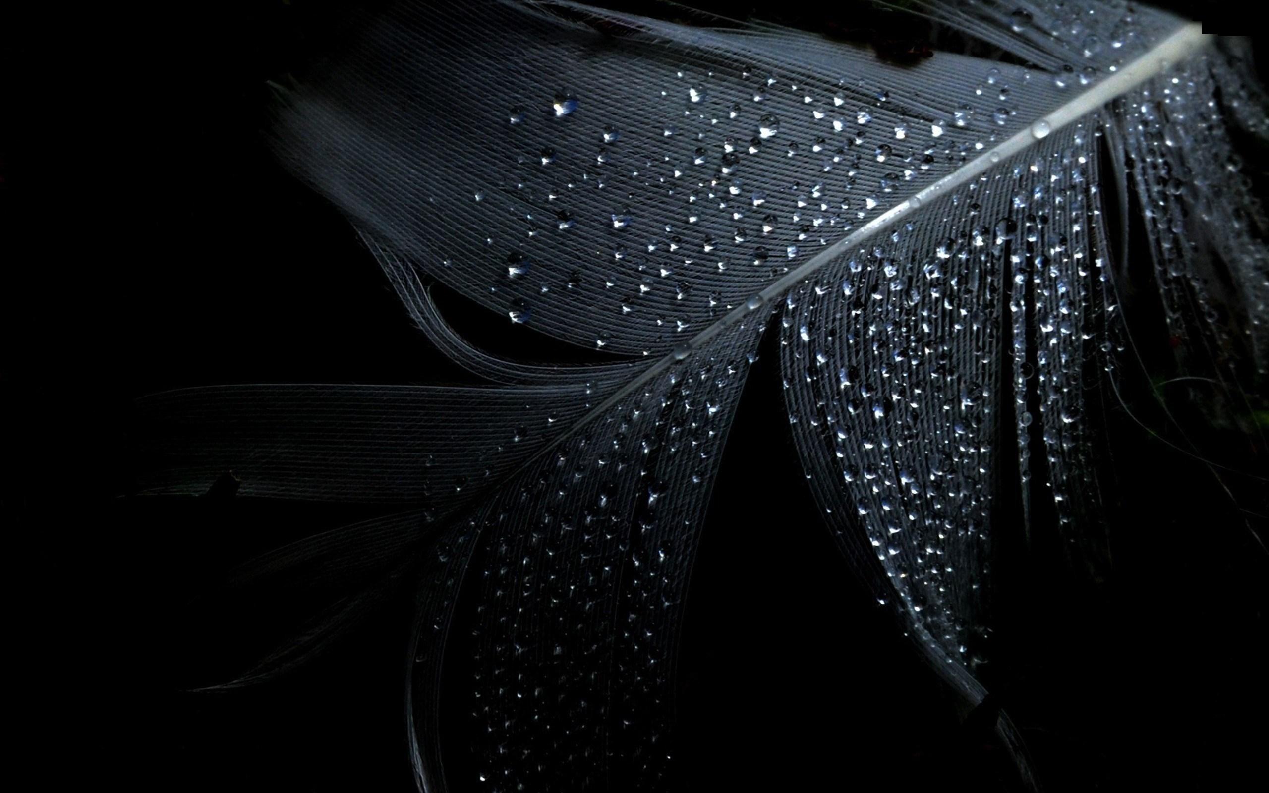 wet water drops black